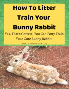 litter train a bunny